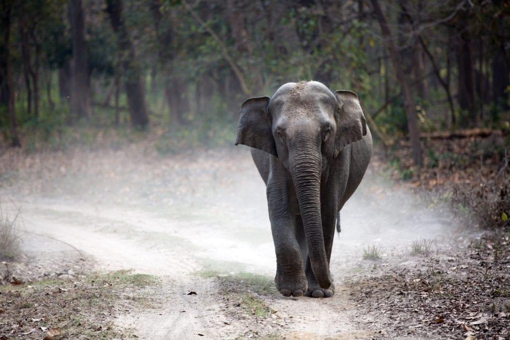 Baby Elephant in India