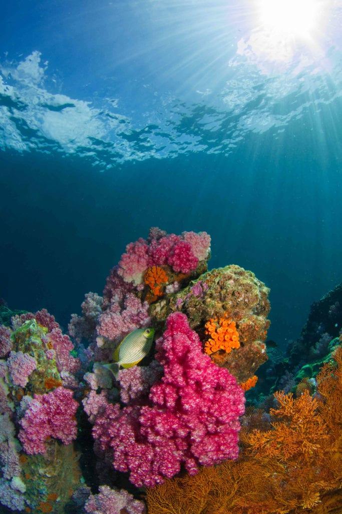 Ko Lipe Thailand Diving Pelorus