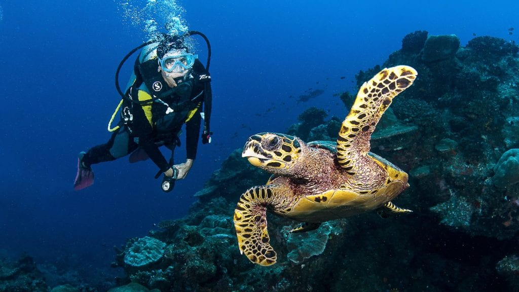 scuba diver with turtle in madagascar