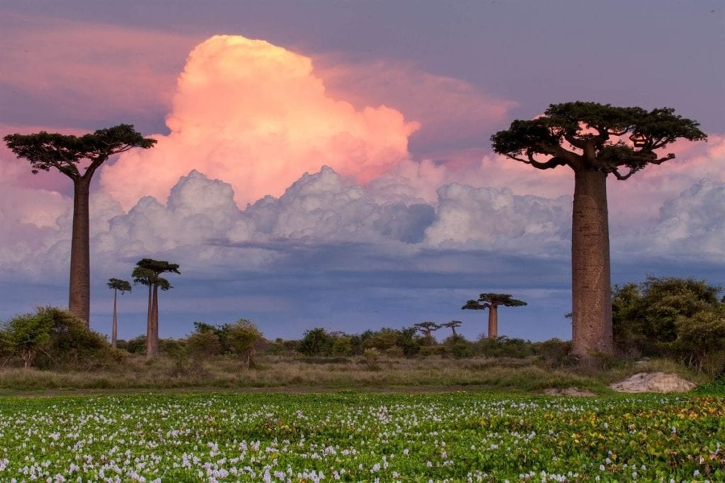 madagascar sunset over baobab trees