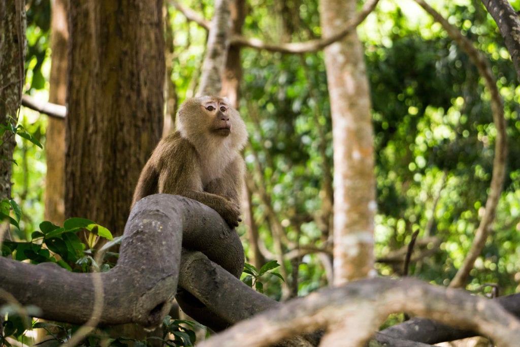Monkey Hill Phuket Thailand Pelorus