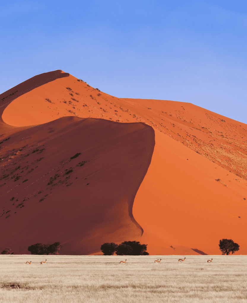 Namibia Springbok Red Dune Sossusvlei