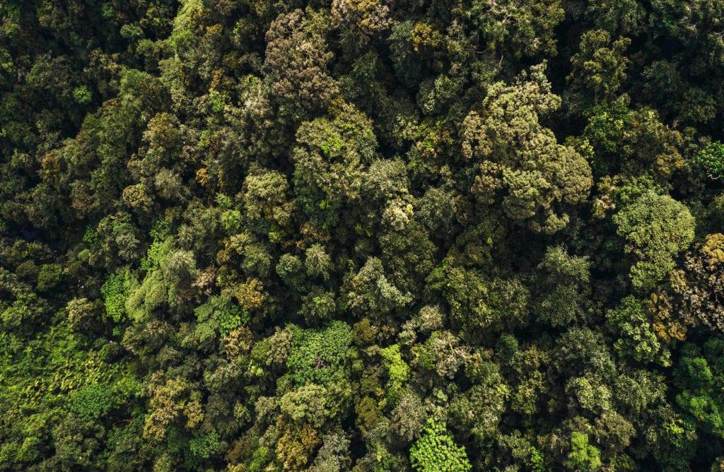 Rwanda Jungle Gorilla Trekking