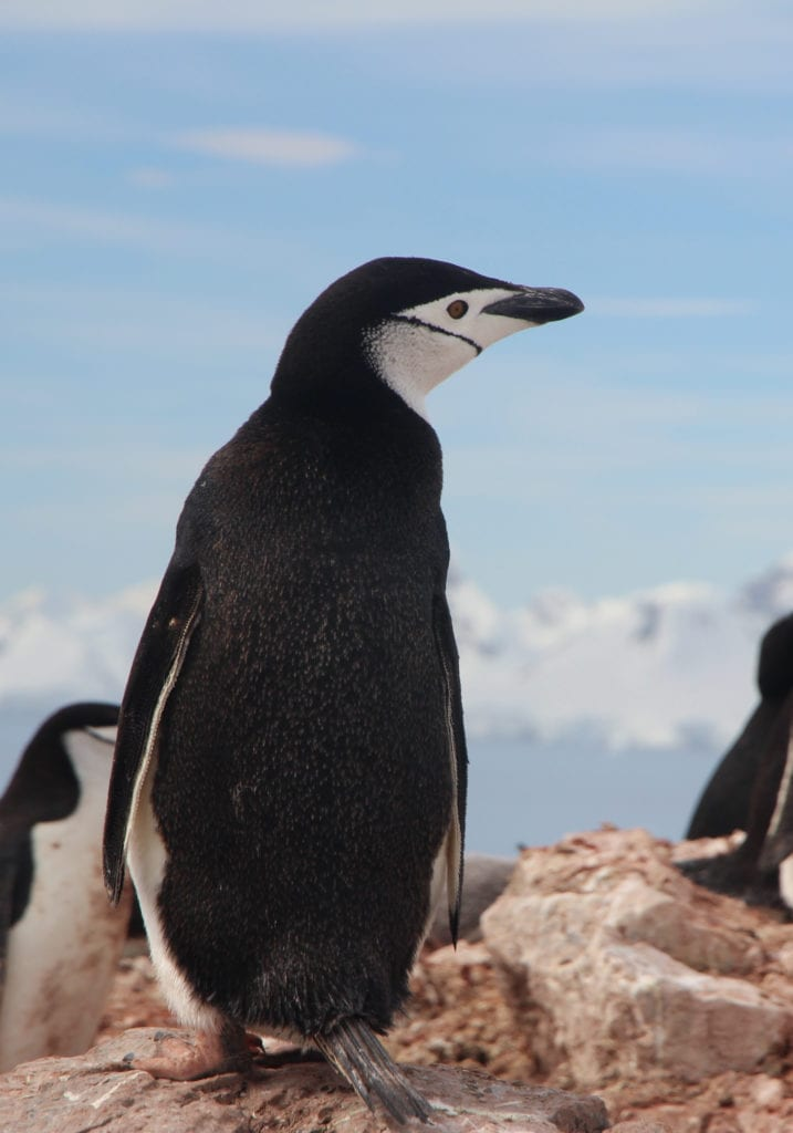 Pelorus Antarctica Penguin Rocks