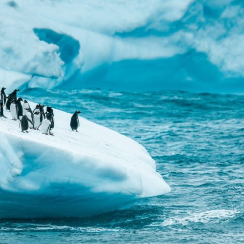 Pelorus Antarctica Penguins Ice
