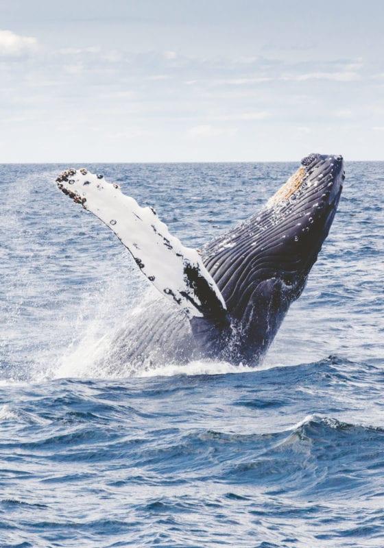 Pelorus Antarctica Whale Ocean