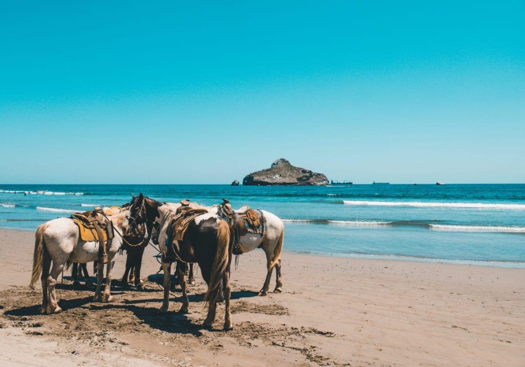 pelorus caribbean horses beach