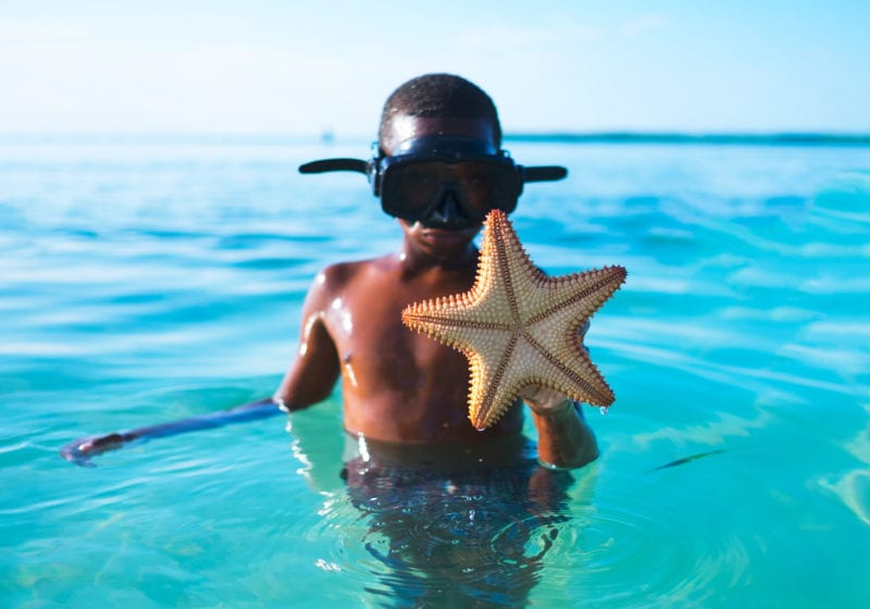 pelorus caribbean starfish boy