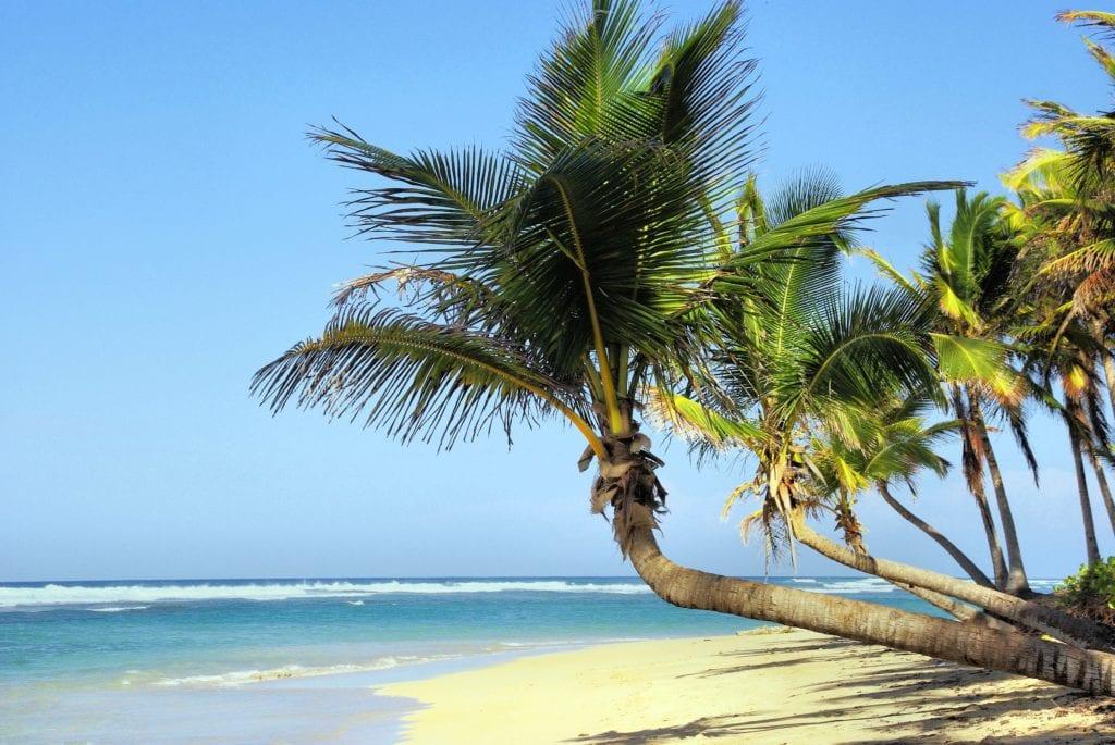Palm trees on Cuba's coastline