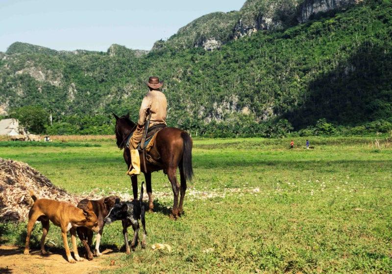 Pelorus Cuba Horse Riding
