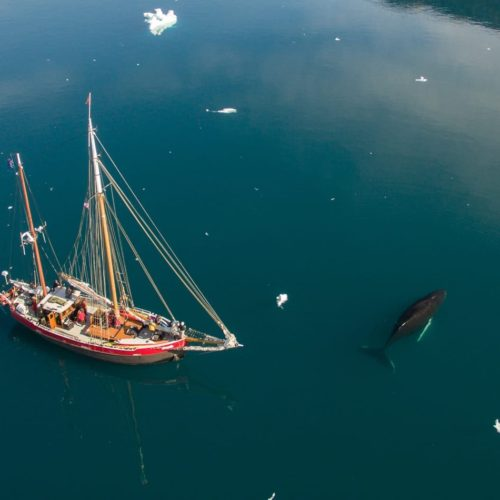 pelorus greenland yacht whale drone