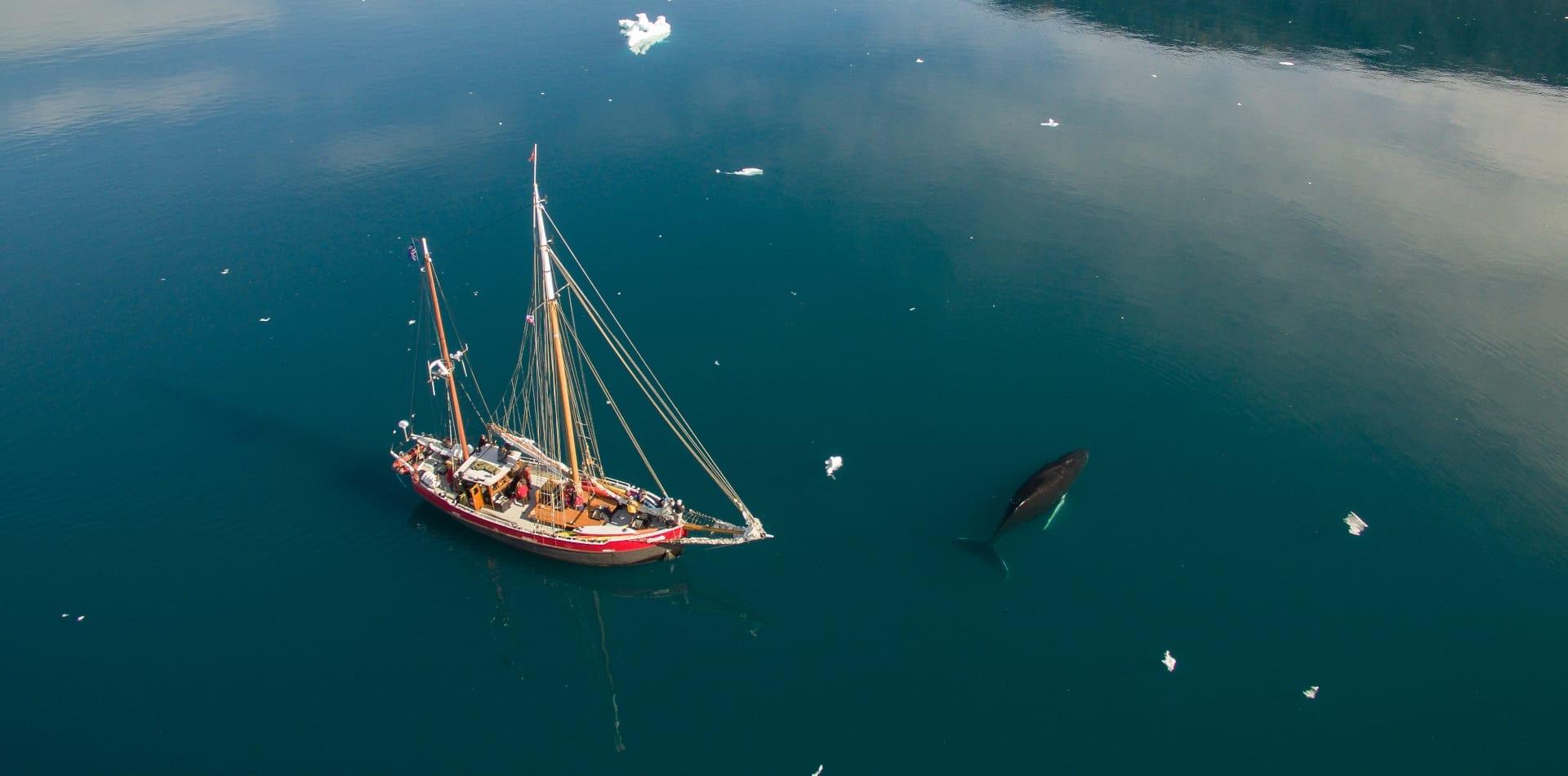 pelorus greenland yacht whale drone