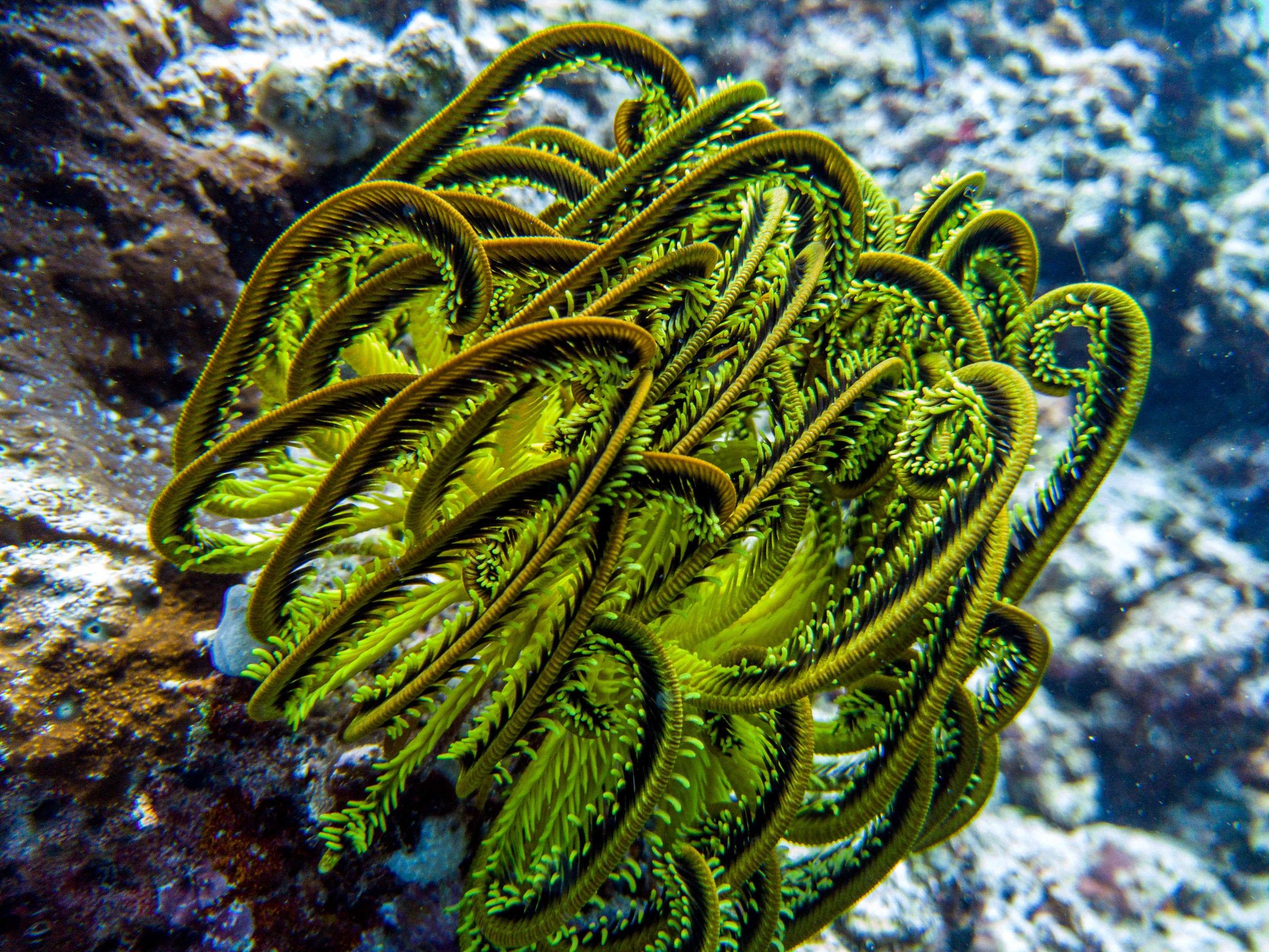 pelorus solomon islands diving coral