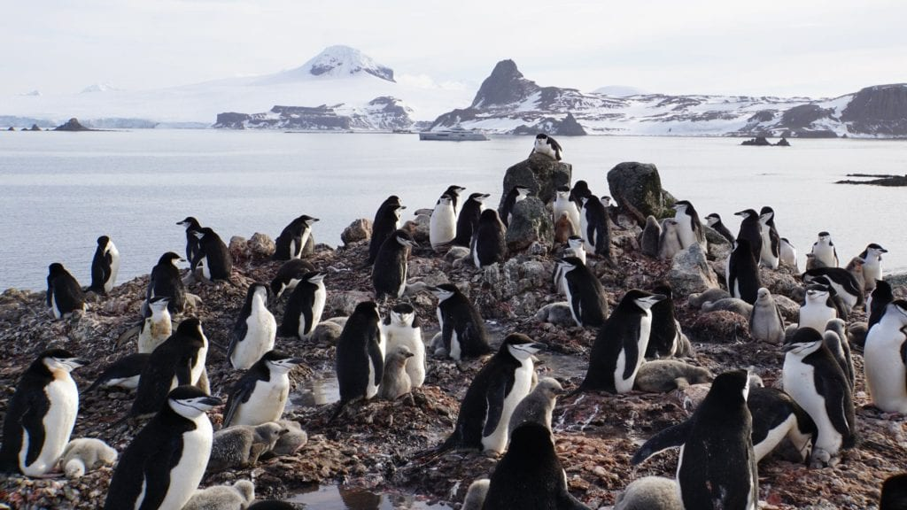 Penguin Colony Antarctica Pelorus