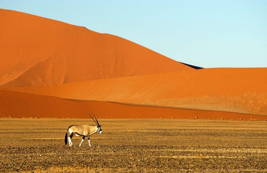 Red Dunes Sossusvlei