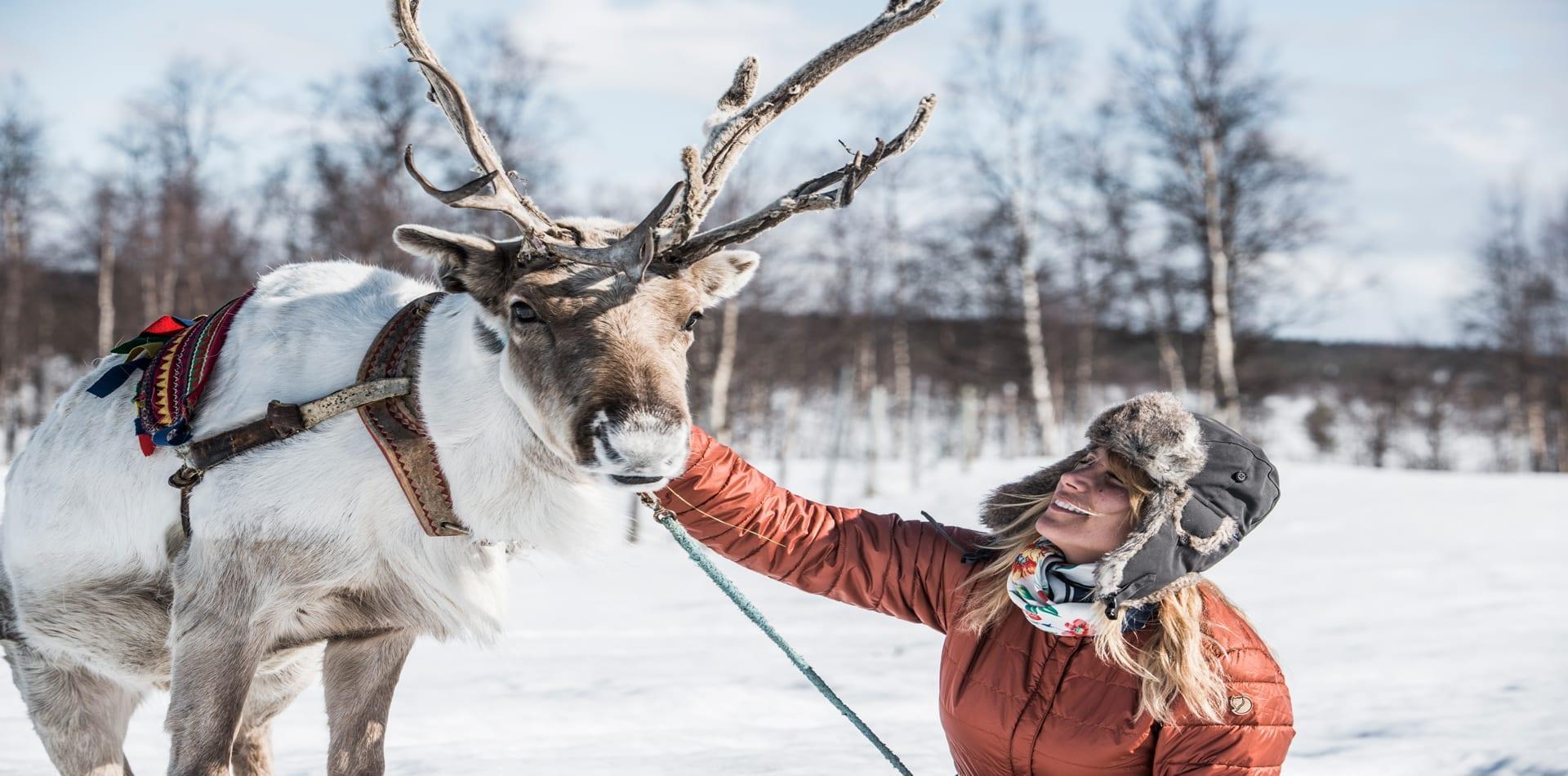 HERO Sami Reindeer Sweden