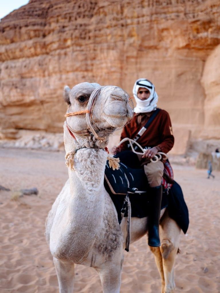 Saudi Arabia Camel Desert Pelorus
