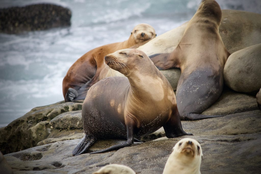 Sea Lions Rocks Alaska