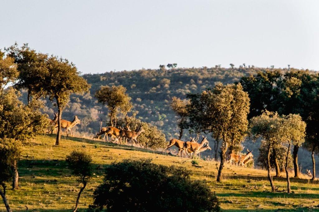 Spain Deer Safari Wildlife