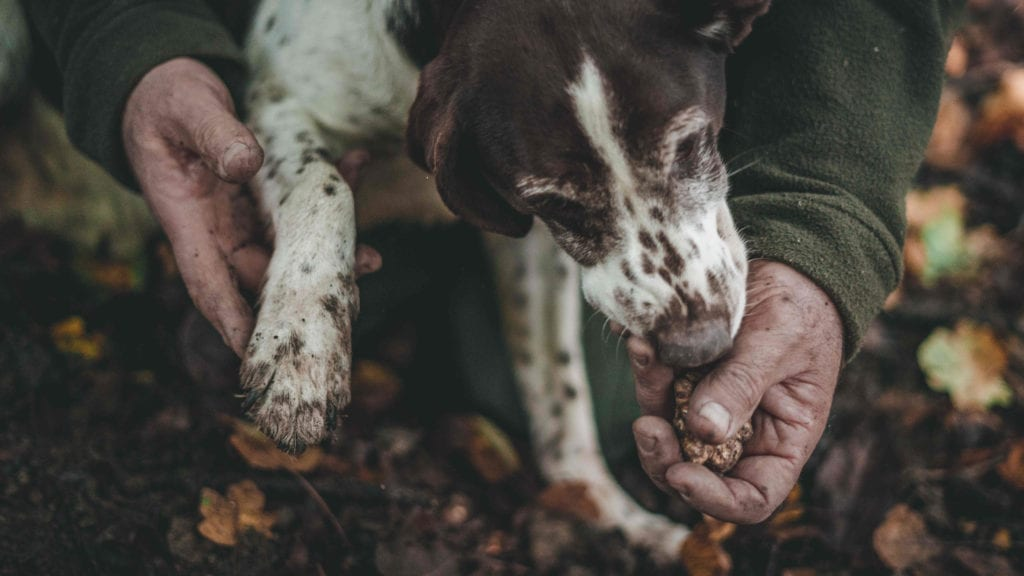 Truffle Hunting with Dog Pelorus