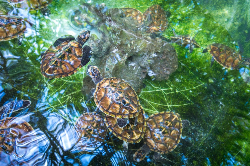 turtle sanctuary efate vanuatu