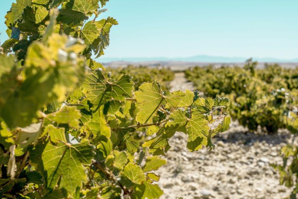 Vine Yards Spain