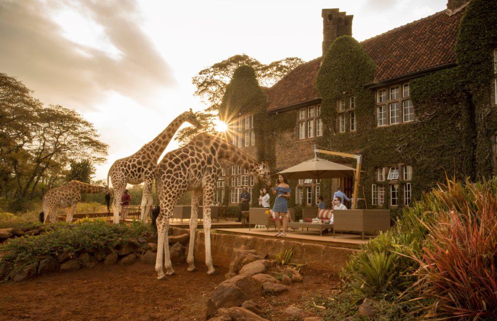 Amazing Giraffe Interactions at Giraffe Manor at Sunset in Kenya