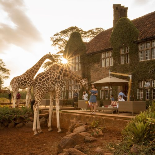 Amazing Giraffe Interactions at Giraffe Manor at Sunset in Kenya