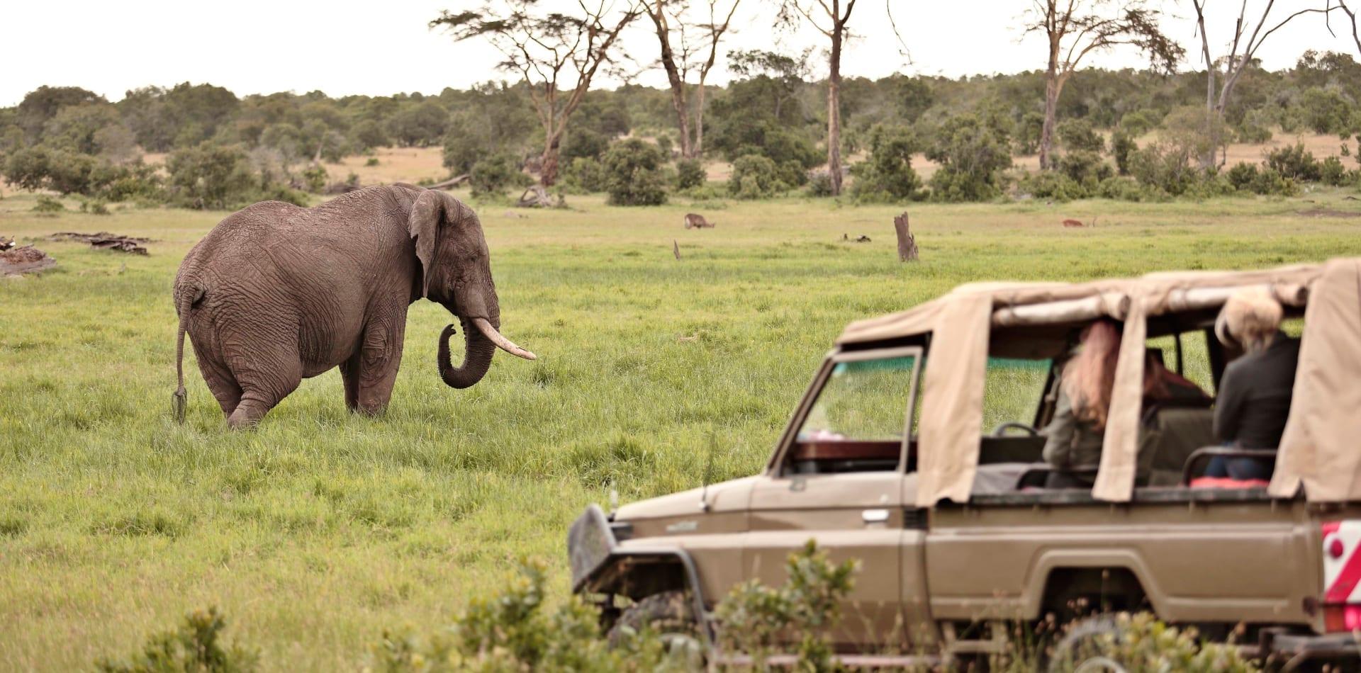 Elephant safari in Angola