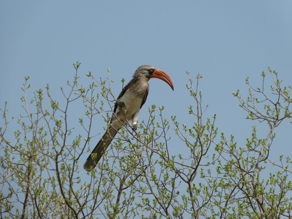 Birdwatching Experiences Wildlife Encounters from Somalisa Camp in Zimbabwe