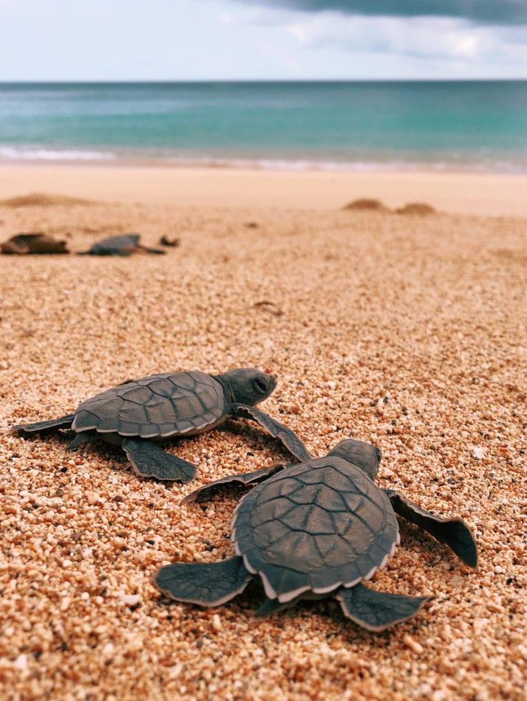 Sao Tome and Principe Bom Bom Resort Turtles