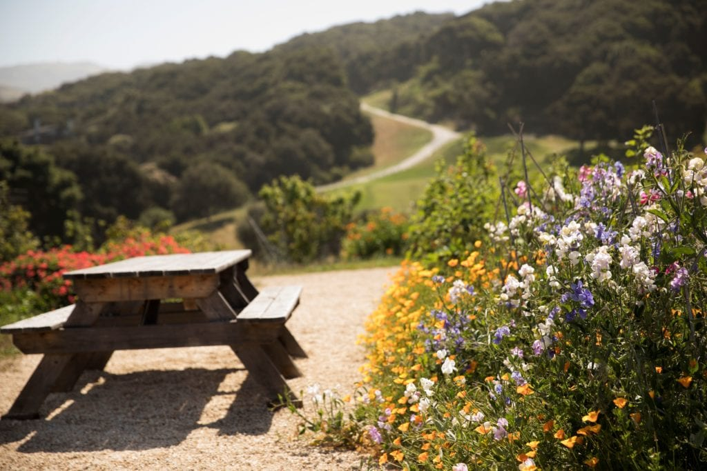 Carmel Valley Ranch Picnic Table and Wildflowers America