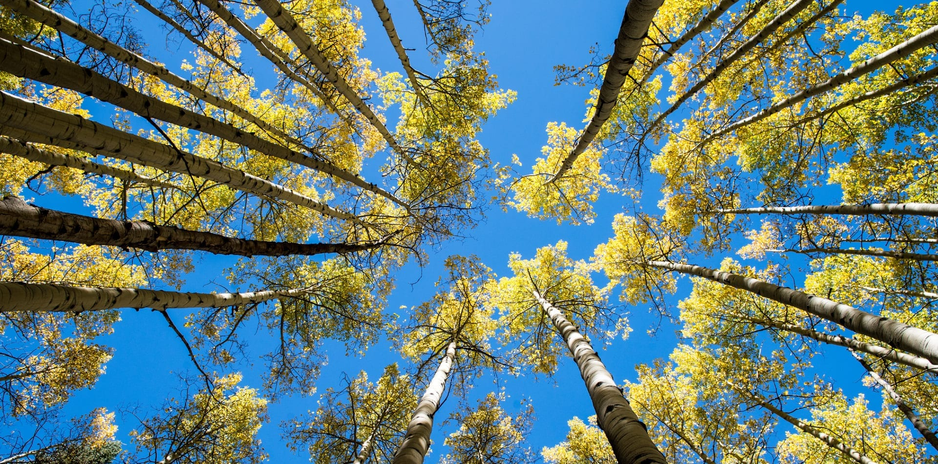 Treeline from below in Colorado