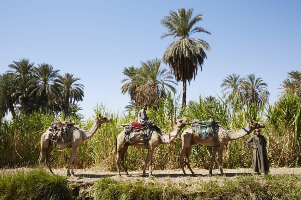 Excursions from Nour El Nil Egypt