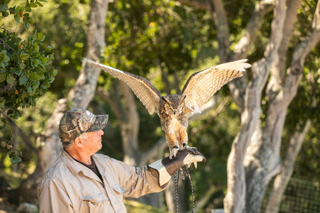 Falconry at Carmel Valley Ranch Activities and Experiences America