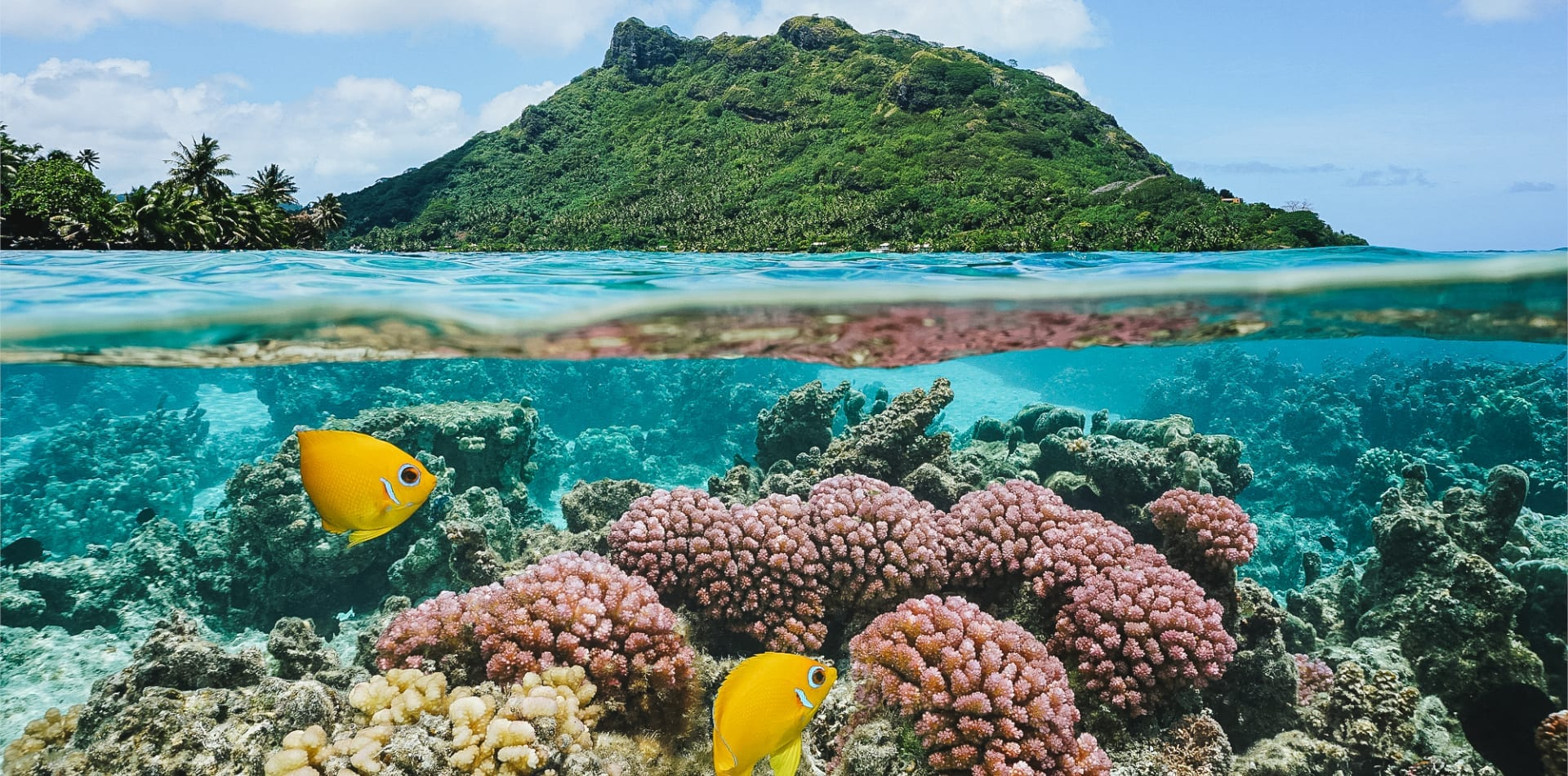 Tropical fish in French Polynesia