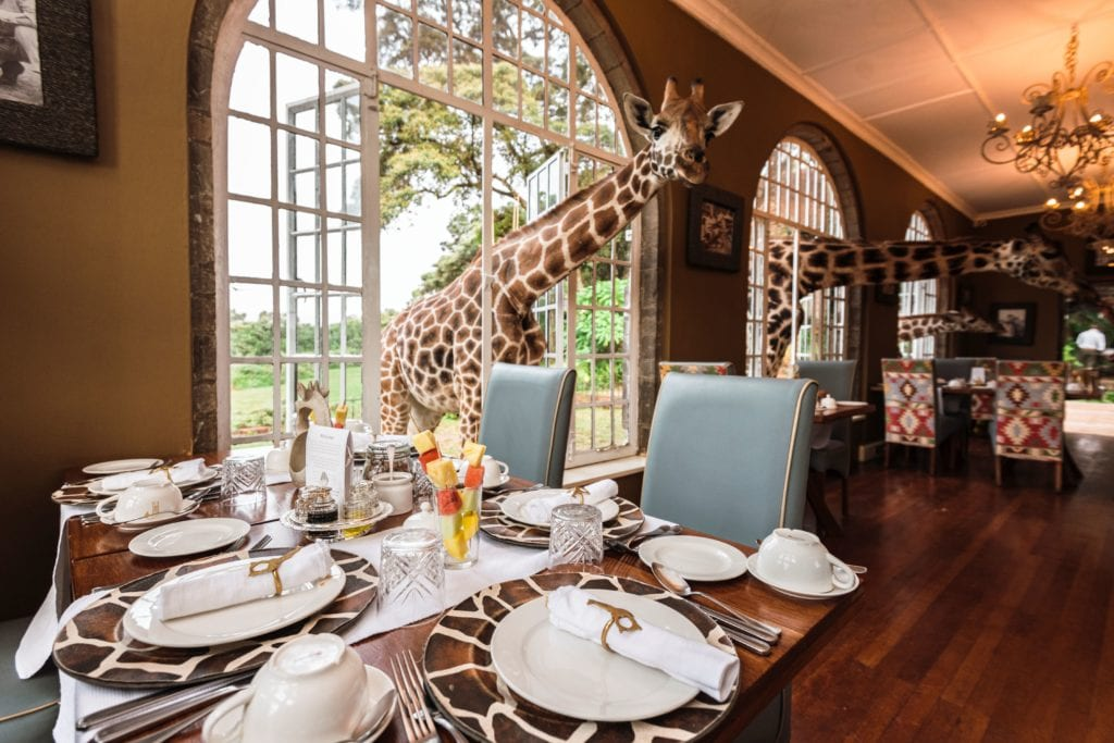 Giraffes Waiting For Breakfast in the Interior of Giraffe Manor, Kenya