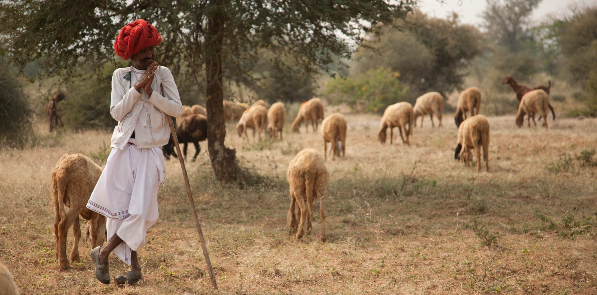 Local man in India with his flock