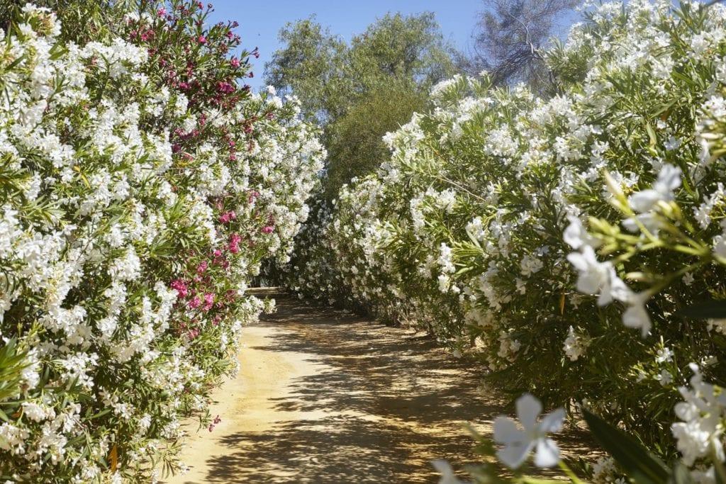 Spain Hacienda Drive