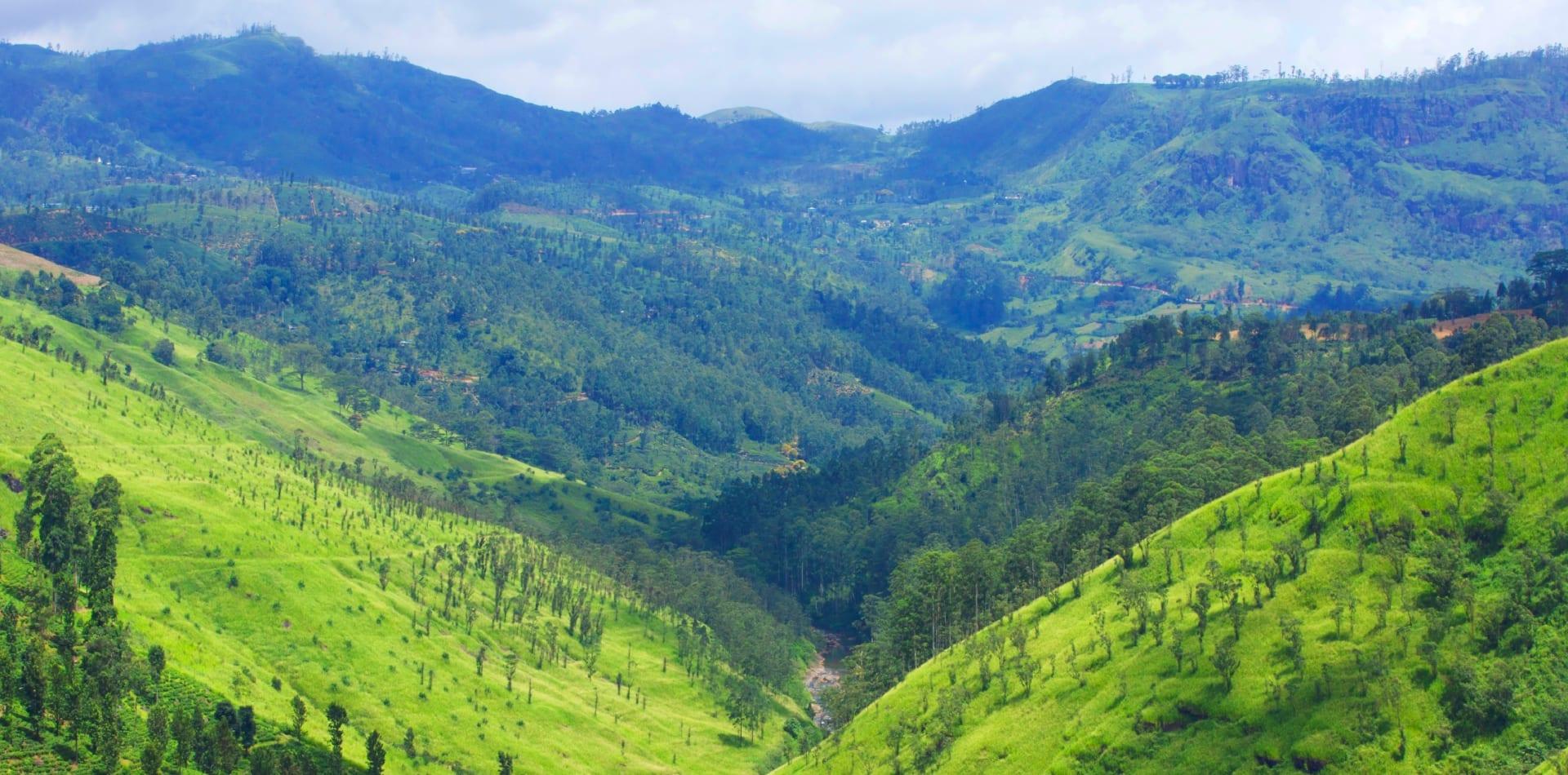 Green highlands in Sri Lanka