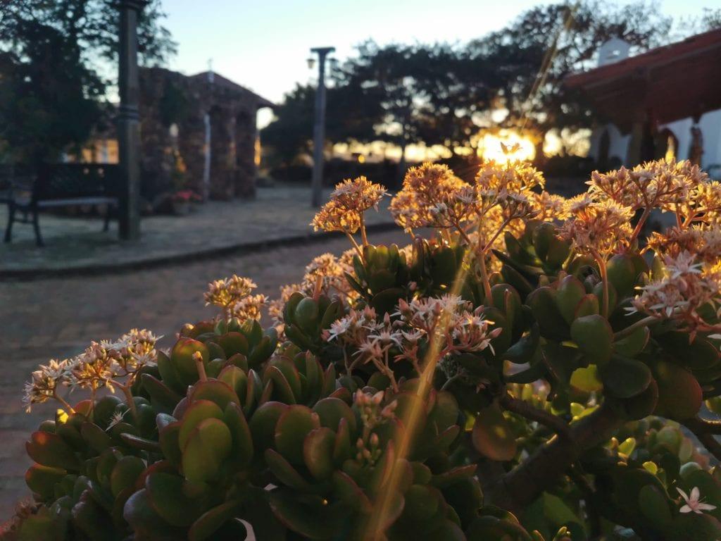 Sunrise over the flowers of El Pueblito Boutique Hotel Bolivia