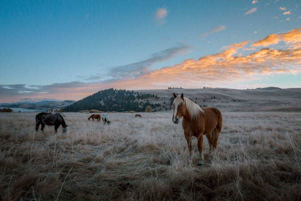The Ranch at Rock Creek Horse Pasture at Sunset Mountains America