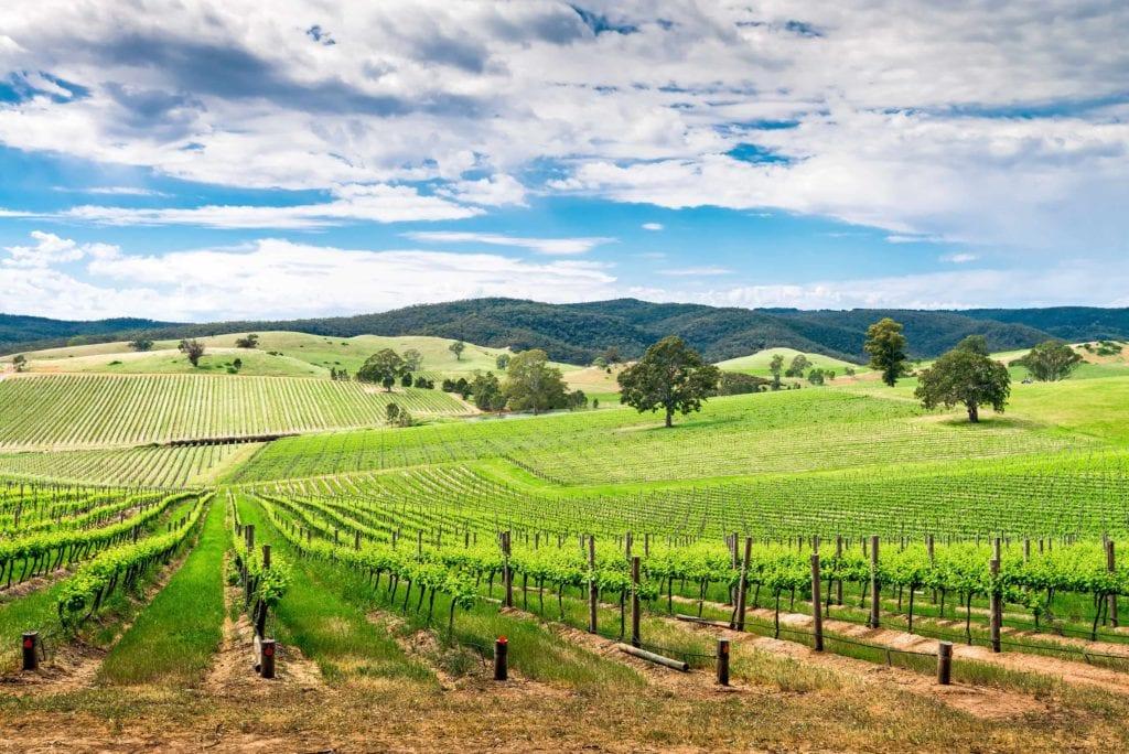 Vineyards of Adelaide in Australia