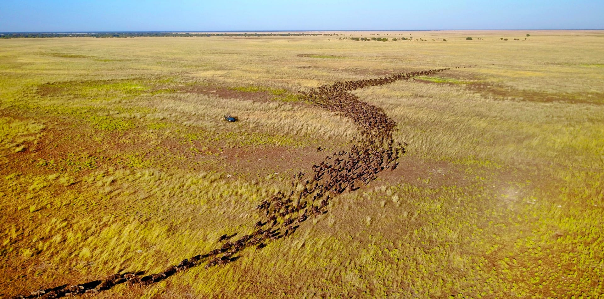 The Great Migration in Zambia