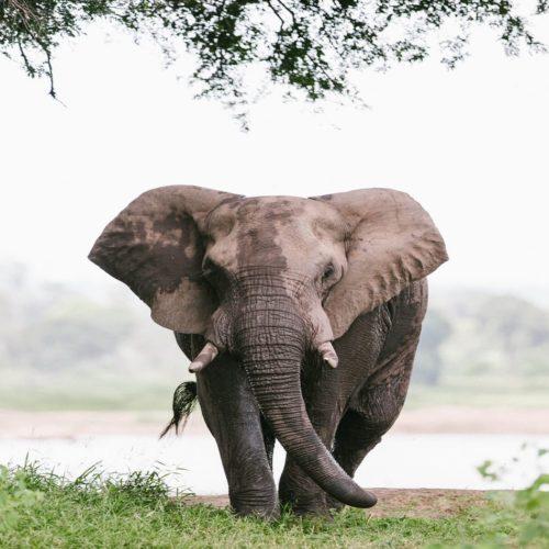 HERO Zimbabwe Elephant