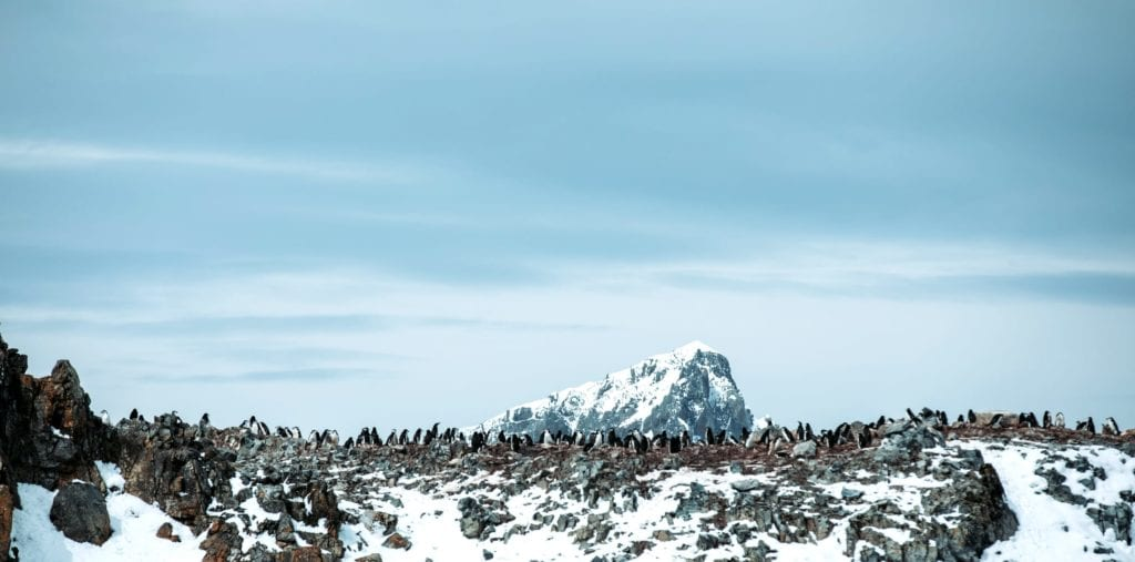 Penguins on Rocks in Antarctica