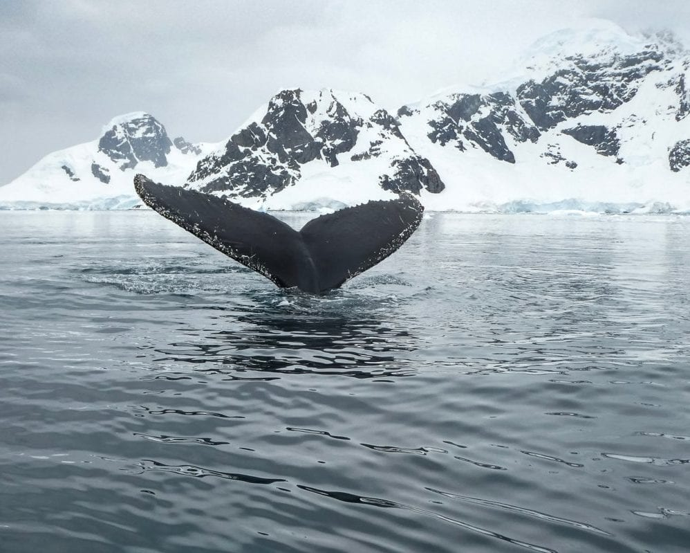 Cruise to Enterprise Island to see humpback whales and orcas