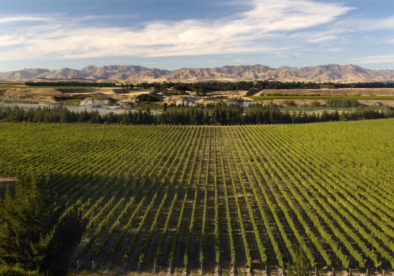 awatere valley marlborough vinyard new zealand