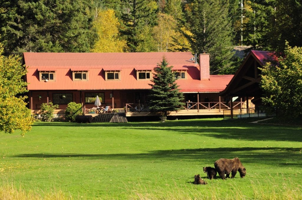 Grizzly bears in front of Tweedsmuir Park Lodge Canada