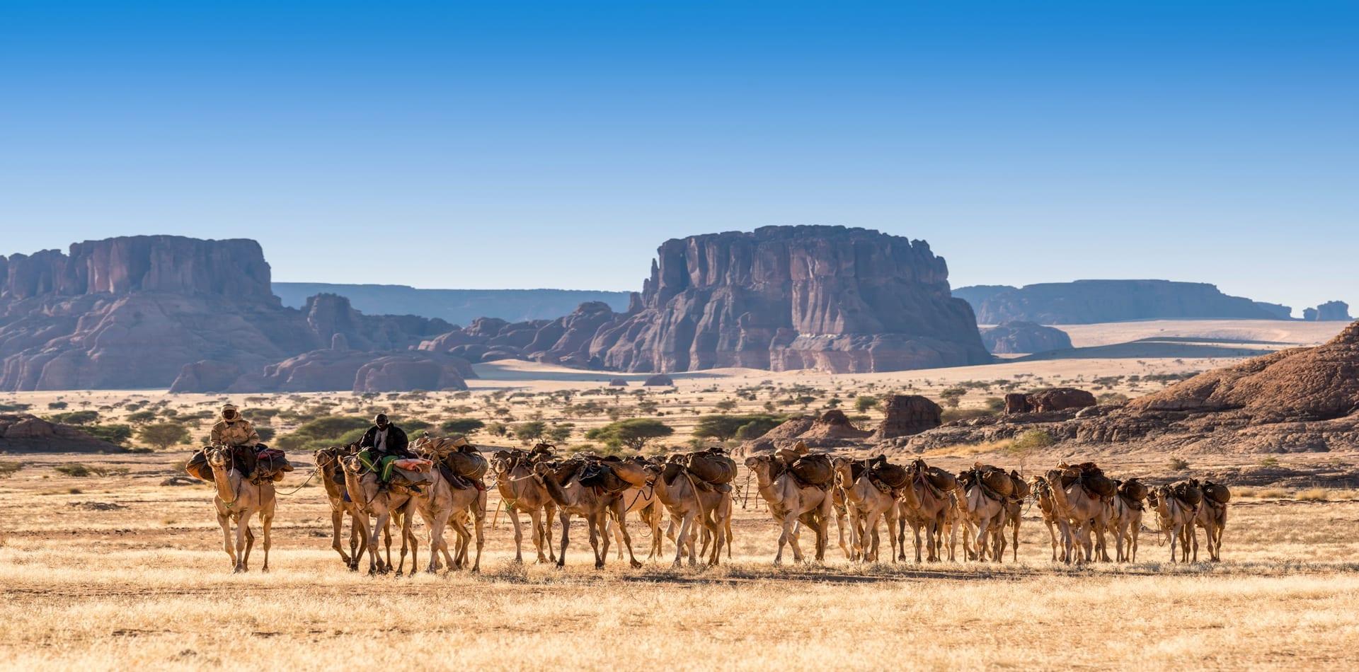 Chad Desert Camel Caravan Hero